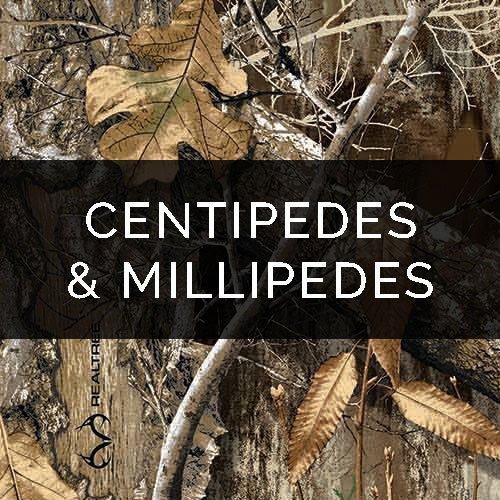 Pest Control Service – Centipede / Millipede Removal