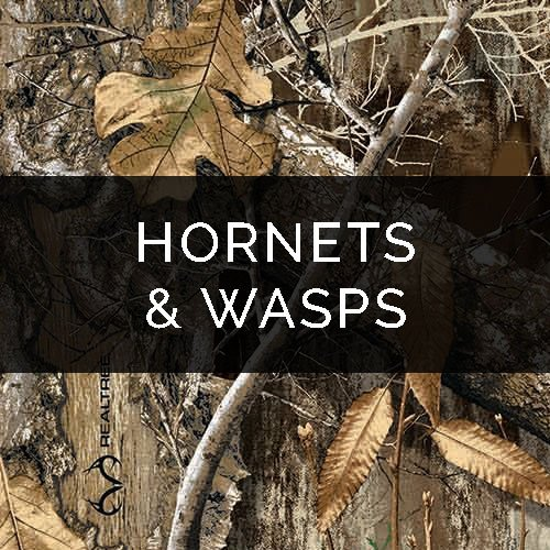 Hornet / Wasp Removal – Pest Control Service
