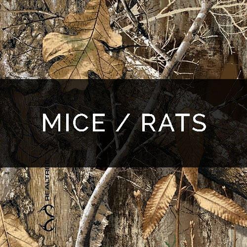 Mice / Rat Removal